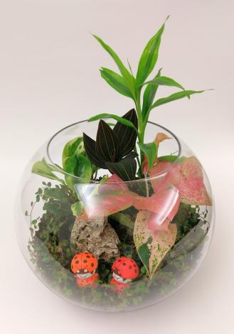 圖5.8月15日的「玩美一夏-觀賞植物組合盆栽生活設計」課程[開啟新連結]