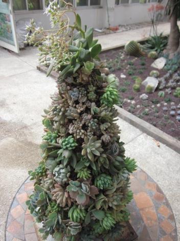 多肉植物組成的聖誕樹[開啟新連結]