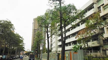 圖6.適度疏剪及降低高度後,並維持基本樹姿及良好樹體力學結構,以維護市民公共安全。[開啟新連結]