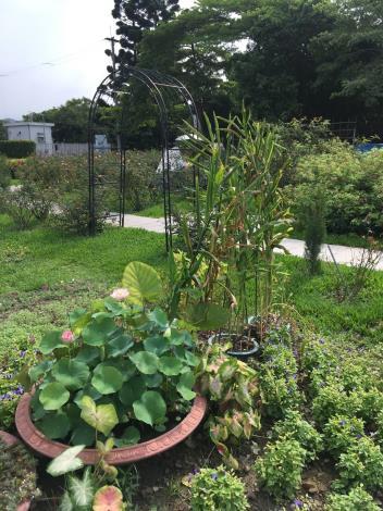 圖3.水生植物搭配草花布置[開啟新連結]