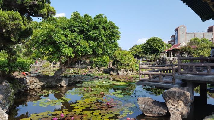 圖4.各色睡蓮讓雙溪公園水池熱鬧非凡[開啟新連結]