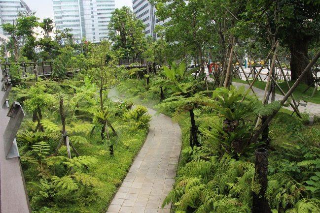 圖4.三重世貿公園翠綠的蕨類谷地園。[開啟新連結]