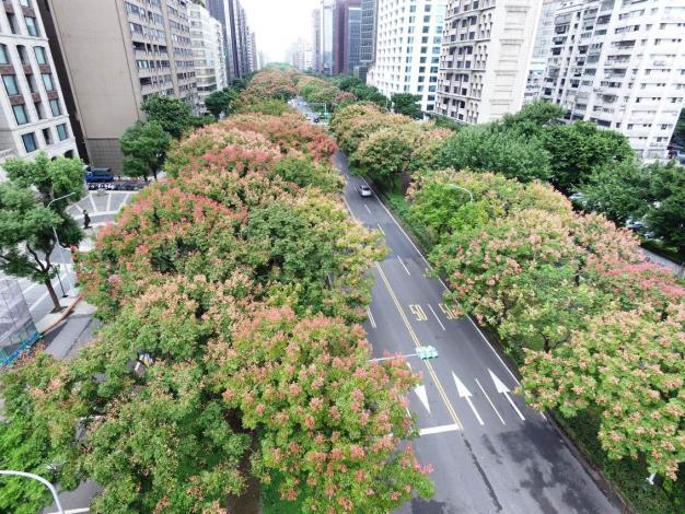 (圖2)秋風染紅枝梢為敦化南路帶來城市景觀美感[開啟新連結]