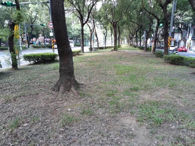 圖1敦化南路一段的樟樹有浮根情形[開啟新連結]