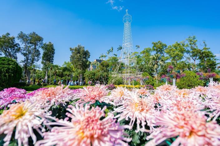 圖4.菊花與8米高的艾菲爾鐵塔譜出「浪漫香頌」 (攝至邱友文)
