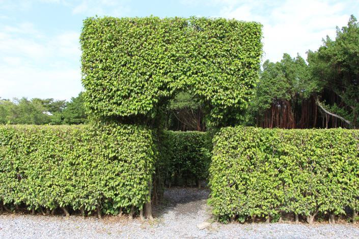 圖13、迷宮花園迷宮入口