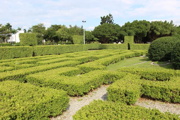 圖14、樹叢較矮的迷宮