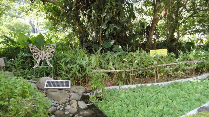 圖3、生態池旁蝴蝶造型光雕