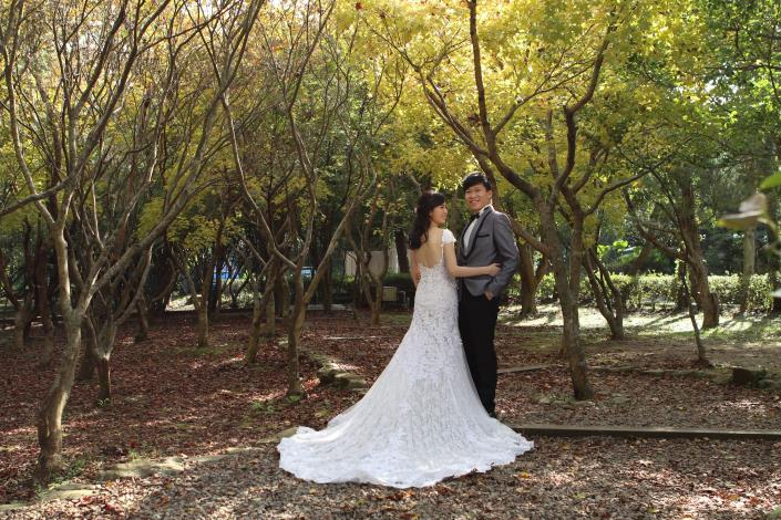 花卉中心的黃楓林是新人熱門取景點[另開新視窗]