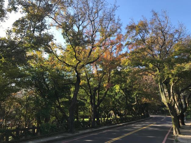 前山公園的楓葉[另開新視窗]