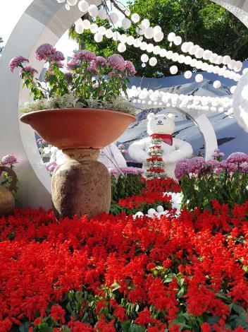 圖4. 美麗的一串紅和菊花