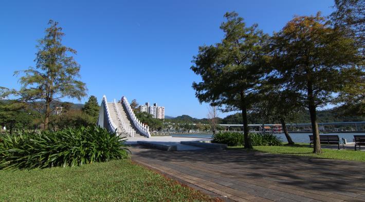 5.大湖公園錦帶橋的西側是池杉,東側是落羽杉。