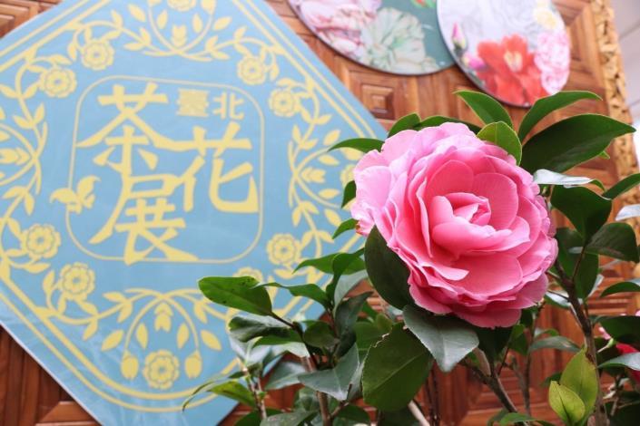 去年臺北茶花展