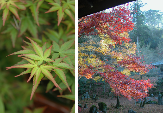 圖3. 2月12日「楓情萬種-楓樹的認識與栽培」課程