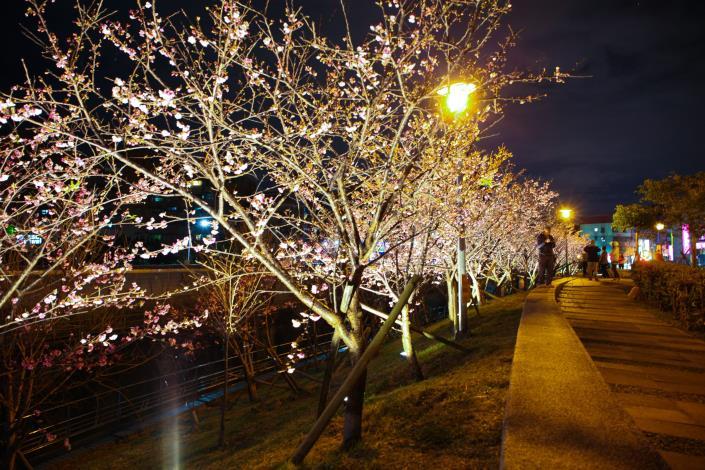 樂活公園夜櫻(資料照片)