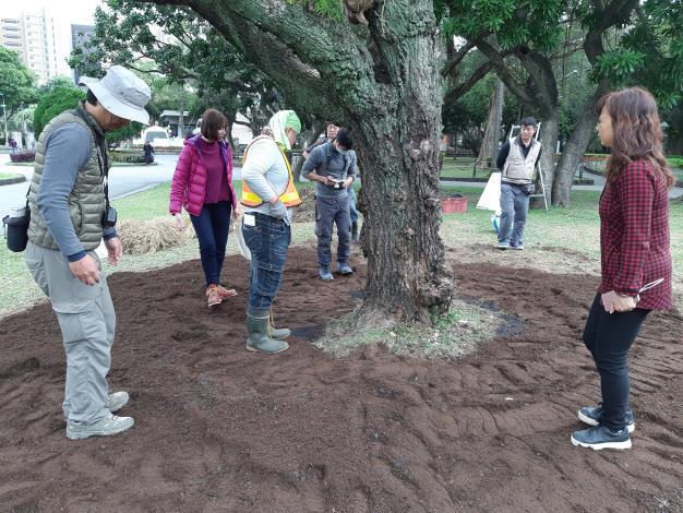圖五、輕輕踩實新覆的營養土,增加根系與土壤的接觸面積[另開新視窗]
