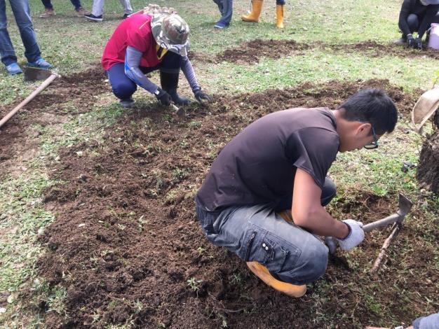 圖四、人工將原有硬實的土攘挖除,避免傷到樹根,再覆上天然且富含腐植質營養素的新土[開啟新連結]
