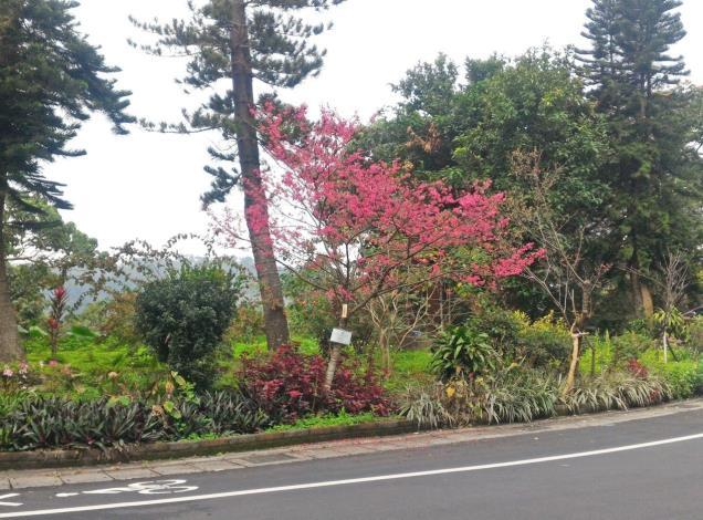 (圖1) 鐵人公園的櫻花為各位單車鐵人們加油[另開新視窗]