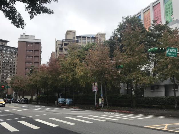 (圖4)南港區重陽路楓香披著三色的冬衣[開啟新連結]