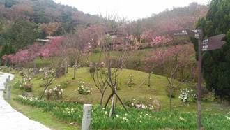 照片3.櫻花溪流區昭和櫻現況1[另開新視窗]