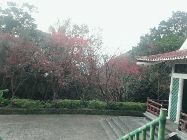 陽明公園第二停車場水簾洞附近花況
