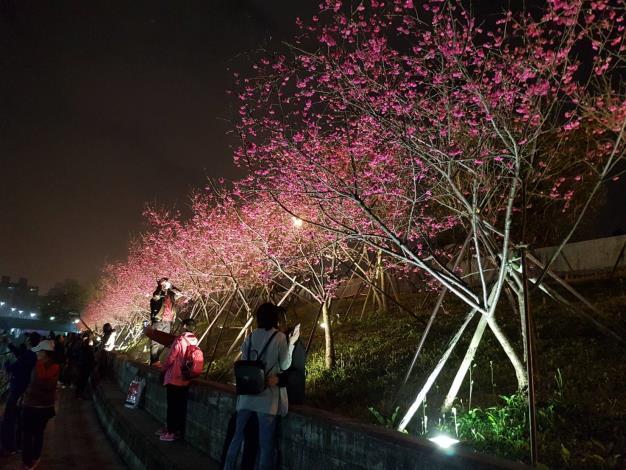 1.第2區八重櫻夜間人潮(資料照片)。