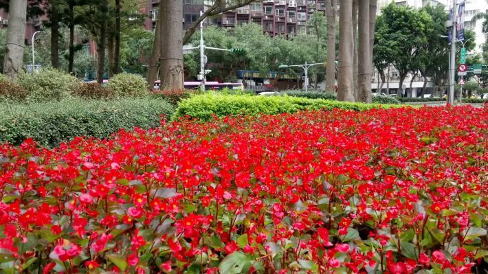 (圖3) 四季草花變化為市容帶來不同美感