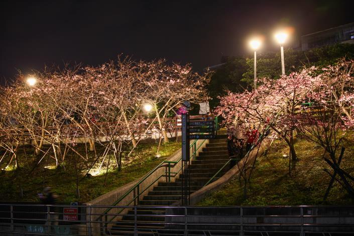 圖2.樂活夜櫻季越夜越美麗[另開新視窗]