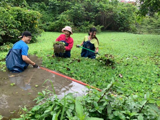 圖5、每年榮星花園的志工們都會幫忙整理生態池,讓螢火蟲們有個安全舒適的生存環境。