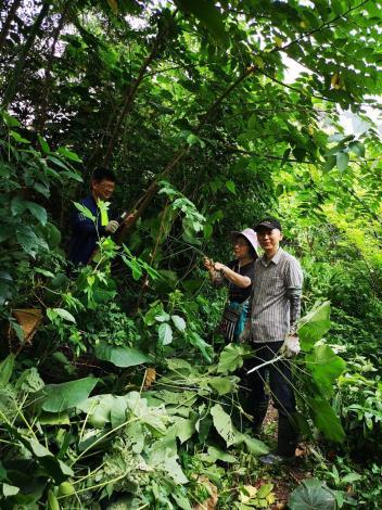 圖11、邊坡上有許多的雜木志工們正忙著移除。