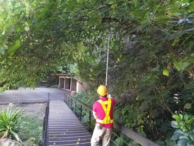 (圖5)修剪轄管區域樹木增加抗風性避免倒伏或斷枝