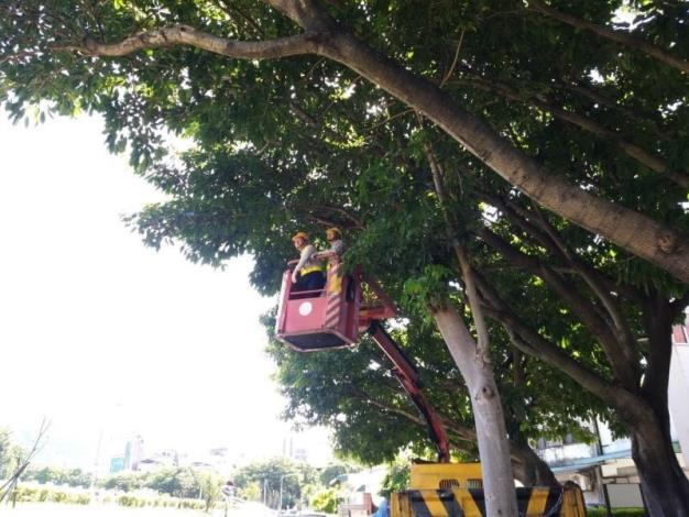 (圖6) 修剪轄管區域樹木增加抗風性避免倒伏或斷枝