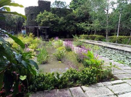 (圖五)生態池一隅