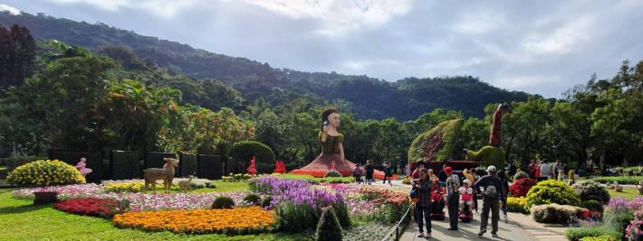 圖7.遊客們駐足欣賞各式菊科花卉