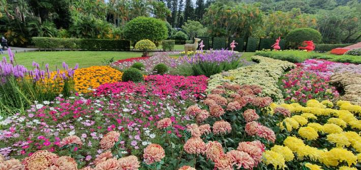 圖4.五彩繽紛花卉提供豐富的視覺饗宴