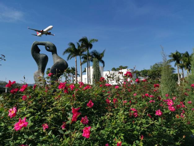 圖5. 飛機不時飛過臺北玫瑰園花海區上空