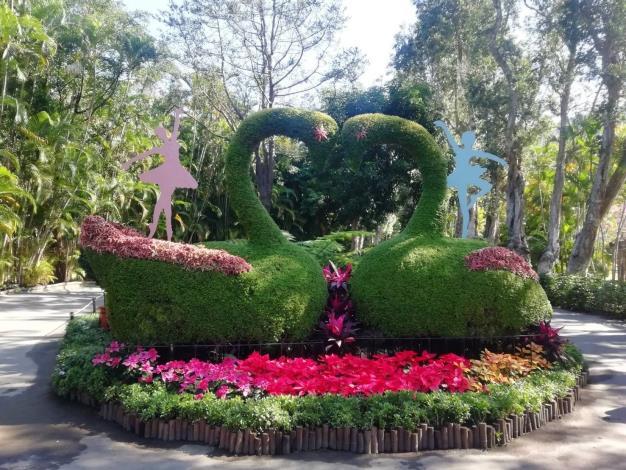 幸福天鵝綠雕搭配聖誕紅等春節應景花卉,充滿喜氣洋洋的過年氣氛