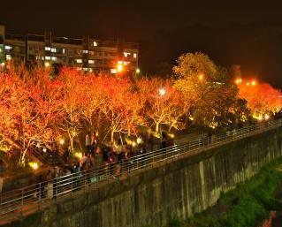 八重櫻櫻花林 (2)
