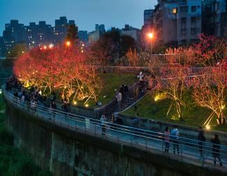 八重櫻櫻花林