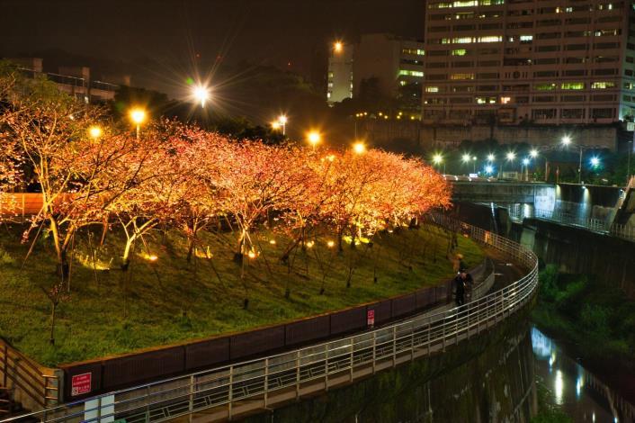圖3樂活公園櫻花林