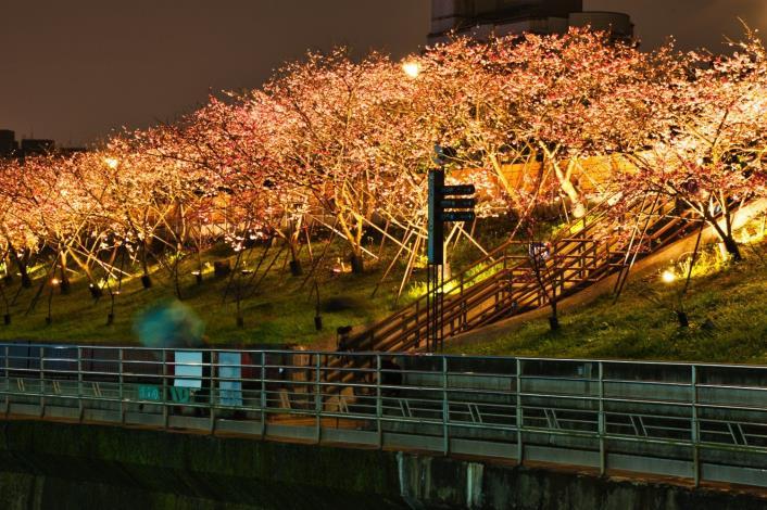 圖4樂活公園櫻花林