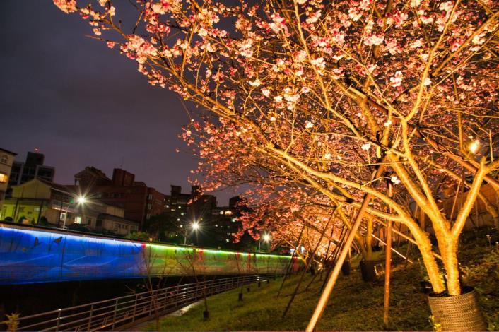 圖2樂活公園櫻花林