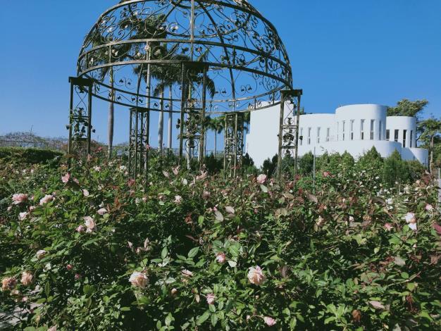 圖6.玫瑰盛開時,公園處圓山所和光之圓頂等建築物都是最佳背景