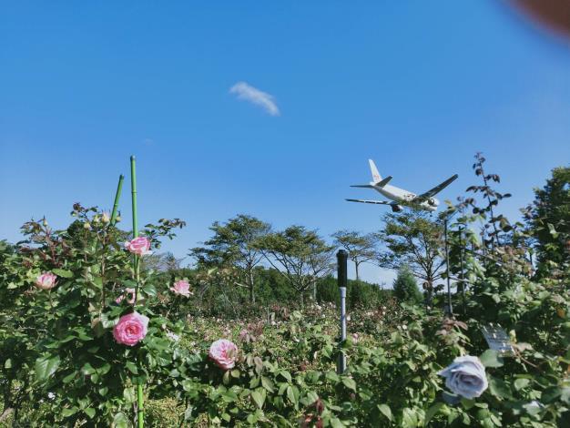 圖1.在玫瑰園中一邊賞花一邊看飛機降落享受都市難得的夢幻奇景
