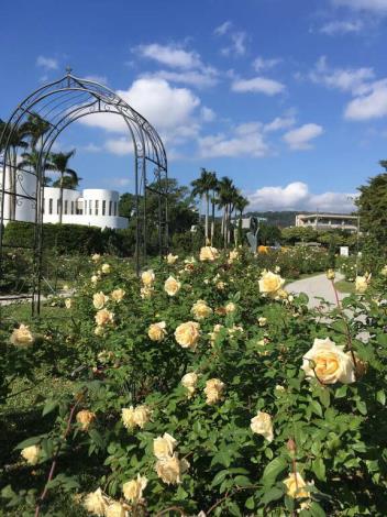 圖7.玫瑰盛開時,公園處圓山所和光之圓頂等建築物都是最佳背景