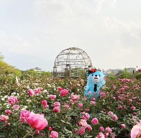 圖7 玫瑰使者「熊寶」現身花海中 與民眾一齊同樂(取自熊寶IG)