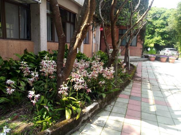 園區內的紅花鶴頂蘭(球根花卉)