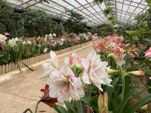 大茶花溫室內的球根花卉佈置