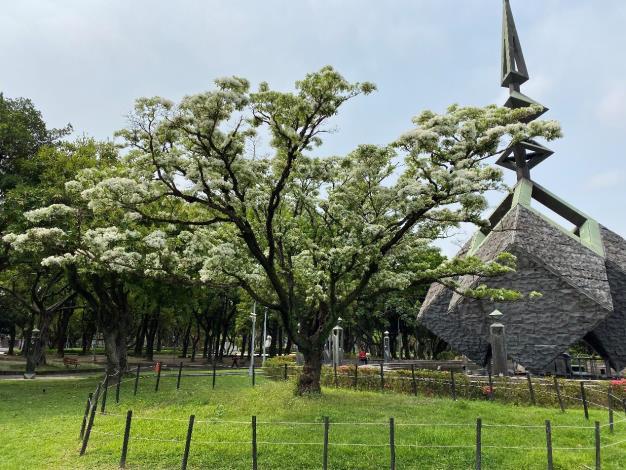 圖1.228紀念碑旁流蘇王枝頭披上雪白薄紗的美景