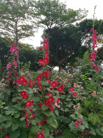 圖3 浪漫天然造景,台北春遊首選絕美拍攝景點
